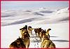 Hundeschlitten fahren in Schweden, Lappland Dalarna Idre