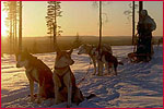 Rundreise / Städtereise / Ferienhaus - Finnland - Unterwegs auf dem Bärenpfad