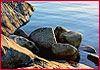Urlaub    auf den Aland- Inseln